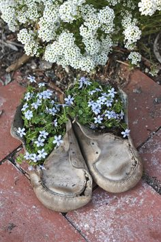 Rooted In Thyme: ~ Antique Baby Shoes & Shoe Rack Living Wall Ideas~