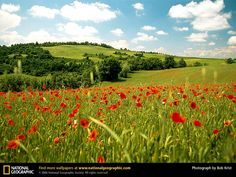 red poppies in italy View Wallpaper, Scenery Wallpaper, Nature Wallpaper, National Geographic, Tuscany Landscape, Italy Pictures, Spring Landscape, Toscana, Tuscany Italy