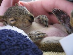 Sweet squirrely dreams