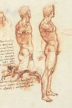 Leonardo da Vinci - Anatomical drawings - Male anatomy