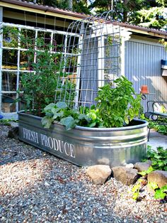 Cute Idea For Container Gardenu2026blue Roof Cabin: A Manageable Veggie Garden