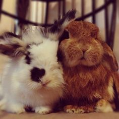 OMG, I love following @bunnymama on IG. Her pics of Rambo and Eddy make my day!