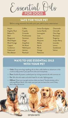 Dog Safe Essential Oils, Essential Oils Guide, Doterra, Easential Oils, Oils For Dogs, Pet Safe, Dogs Of The World, Dog Care, Young Living Pets