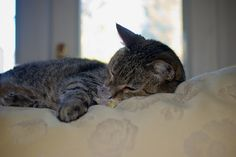Simon by mousetrout, via Flickr
