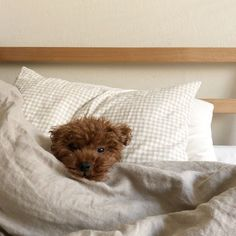 you wake up after getting 8 straight hours of sleep 🥐 Happy Sunday, friends! Tune in today at EST for our exciting news ✨ Love Dogs, Puppy Love, Cute Puppies, Dogs And Puppies, Doggies, Toy Poodle Puppies, Toy Poodles, Adorable Dogs, Adorable Animals