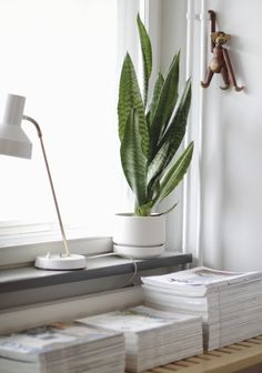 According to this article, a houseplant in your office can make you more creative and productive.