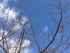 autum sky. 秋空。
