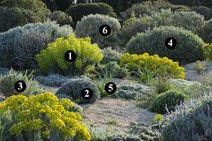 1 : Euphorbia characias subsp. wulfenii 2 : Lavandula x intermedia 'Grosso' 3 : Phlomis lychnitis 4 : Phlomis 'Le Sud' 5 : Asphodelus microcarpus 6 : Phlomis purpurea