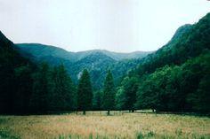 Il #Parco Nazionale #Foreste #Casentinesi e il #Monte #Falterona - #Arezzo #Toscana #Tuscany #Italy