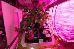 Veggies in Space! The crew aboard the International Space Station have grown two batches of mixed greens (mizuna red romaine lettuce and tokyo bekana cabbage) and are now running two Veggie facilities simultaneously.