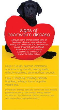 Signs Of Heartworm Disease In Pets~ PLEASE Re-pin to spread awareness! Thank you for your help to save a pet....