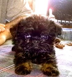I am 8 weeks old and ready to be picked up!!! Mommy and Daddy are coimg to get me this weekend! Yay!