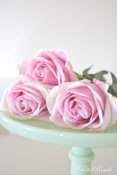 Mammabellarte: Crazy for Pink Roses!