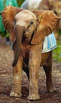 I broke my baby elephant's heart: Daphne Sheldrick has dedicated her life to…