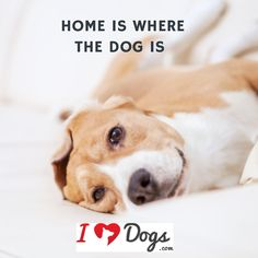 Home is where the dog is..