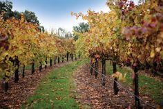 10 Great Wine Country Harvest Finds | Ken's Wine Guide Blog. Mentions Mettler Family Vineyards and LangeTwins Winery, Lodi.
