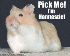 Fun Hamster Pictures