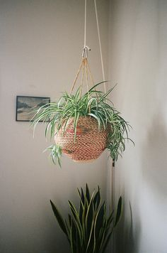 Basket hung w/carabiner & rope Beautiful option to hang a spider plant which doubles as air purifying