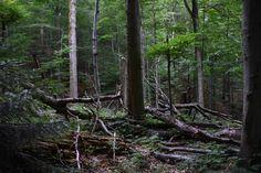 Kto by chcel vidieť skutočný, ľudskou rukou nedotknutý prales, nemusí hneď cestovať do Amazónie. Niekoľko sa ich nachádza aj na Slovensku.