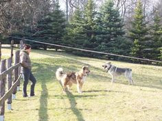 Our dogs Hudy and Kala Goats, Activities, Animals, Animales, Animaux, Animal, Animais, Goat