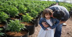 6-year-old Charlotte Figi suffered from a very rare disease called Dravet syndrome that caused her to have more than 300 seizures a week. It also left her with symptoms similar to autism. Her family tried every treatment available, but nothing worked. Then her neurologist suggested that they try cannabis oil extracts. The results blew them away.   Fortunately for Charlotte, her family lives in Colorado, which is one of the most progressive states out there for cannabis laws.