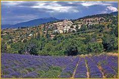 Meilleure saison pour la lavande en Provence : mi- juillet