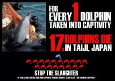 For every 1 dolphin taken captive 17 DIE! Stop the killing Taiji, Japan. Seaworld.