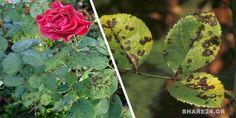 Gardening Tips, Succulents, Home And Garden, Backyard, Nature, Flowers, Plants, Blog, Ideas