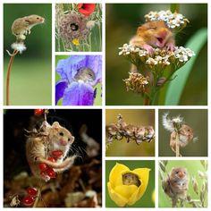 Flower mice Bird Feeders, Outdoor Decor, Flowers, Animals, Mice, Home Decor, Animales, Decoration Home, Animaux