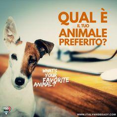 Qual è il tuo animale preferito?