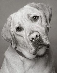 Oh, those puppy dog eyes