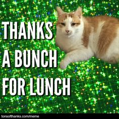 Thank you ​memes can be fun! These nice safe for work thank you memes can be a quick way to express your gratitude. And the cats are cute! Thank You Memes, Funny Thank You, Thank You Cards, 31 Day Challenge, Writing Challenge, Thanks Meme, Birthday Thanks, Email Subject Lines, Thanks A Bunch