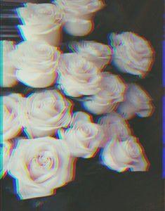 A vida é cheia de rosas