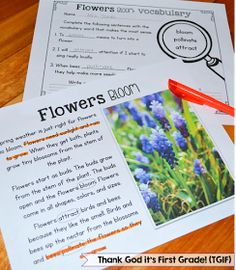 TGIF! - Thank God It's First Grade!: Close Reading in 1st Grade - Spring Edition