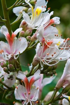 Honeysuckle by garryknight/flickr.com