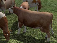 Kinematisch animierte Kühe ab EEP 9.1