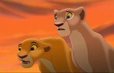 Queen Nala my little sister and her daughter, Princess Kiara my future niece/god daughter, watching as King Simba my brother in law exiles Kovu my godson. Lion King Simba's Pride, Lion King 3, Lion King Story, Lion King Fan Art, Lion King Movie, Disney Lion King, Lion King Images, Lion King Pictures, Kiara And Kovu