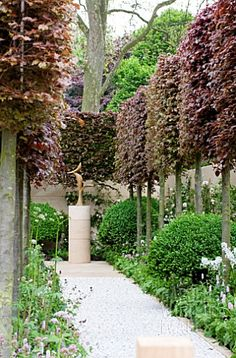 Fascinating Evergreen Pleached Trees for Outdoor Landscaping 77 Garden Hedges, Garden Trees, Garden Paths, Back Gardens, Small Gardens, Outdoor Gardens, Garden Screening, Exterior, Chelsea Flower Show