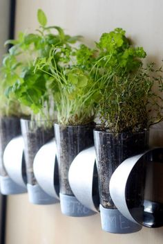 Save your counter space by planting herbs in glass jars, and mounting them near your kitchen.  Get the tutorial from Curbly »   - HouseBeautiful.com
