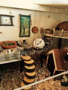 Habitat Du Hamster, Dwarf Hamster Toys, Hamster Diy Cage, Diy Hamster Toys, Robo Dwarf Hamsters, Gerbil Cages, Hamster Life, Hamster Stuff, Pets