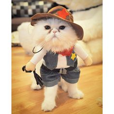 Cat Cowboy Costume //Price: $14.00 & FREE Shipping //     #instagood
