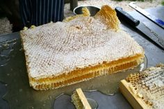 How to harvest Honey from Natural Comb « Milkwood: permaculture farming and living