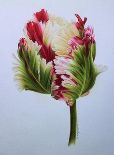 Bloom 04 by on DeviantArt Botanical Drawings, Botanical Illustration, Botanical Prints, Watercolor Illustration, Arte Floral, Watercolor Flowers, Watercolor Paintings, Bloom, Parrot Tulips