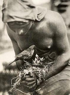 Blackbird's nest in the folded hands of a statue on a grave in Berlin, Germany, 1932.