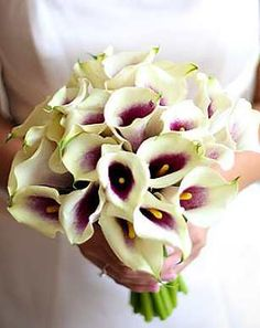 I like the ivory calla lily with plum center. I would add roses in some how and some twigs.