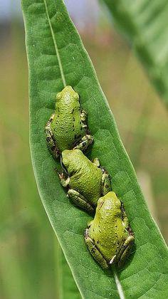 Froggy Slide