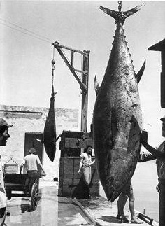 Giant tuna caught off the coast of Italy. 'Favignana' (1954) by German photographer Herbert List (1903-1975). via Mare Magazine