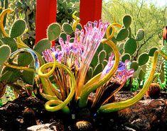 Clic para ampliar Desert Botanical Garden Phoenix, Arizona Attractions, Birmingham Botanical Gardens, Myrtle Tree, Chateau Versailles, Denver Botanic Gardens, Most Beautiful Gardens, Soothing Colors, Glass Garden