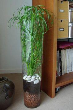 an easy-going green plant – my mood ticket in color – Terrarium Succulent Pots, Planting Succulents, Planting Flowers, Indoor Water Garden, Indoor Plants, Shade Plants, Green Plants, Vases Decor, Plant Decor
