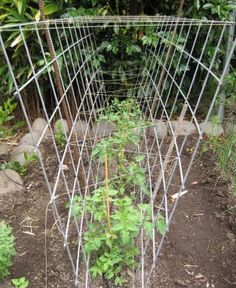 Try hog wire for tomato cages...
